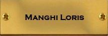 Manghi Loris